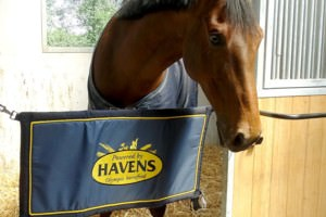 HAVENS stable guard